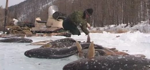 Winter-fishing-in-the-mountains-of-Baikal-region.There-will-sure-be-fish-Mikhalich-Russia