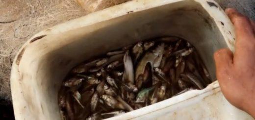 Fishing-Mind-Winter-Fishing-Fish-Hunting-5