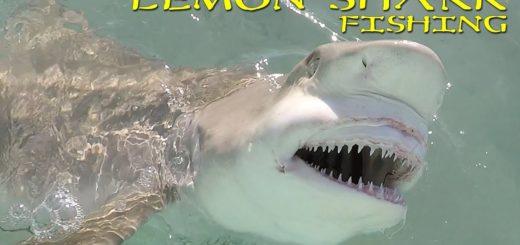 Catching-Big-Lemon-Sharks-Fishing-Fun