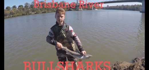 Brisbane-River-BullSharks-Winter-Fishing-TFF