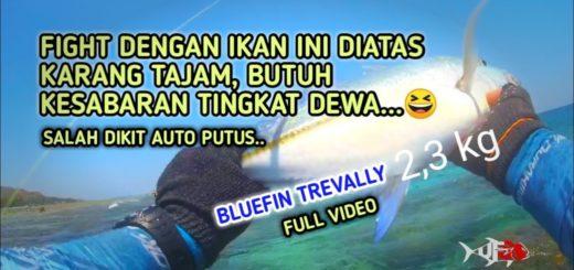 13-Cara-Fight-Bluefin-Trevally-2-Kg-Main-di-Karang-Ultralight-Fishing