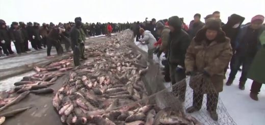 Amazing-Catching-Fish-On-The-Frozen-River-Winter-Fishing