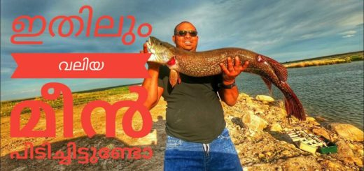Pike-attack-predator-fishing-how-to-catch-big-fish-using-lures