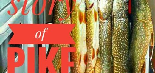 Pike-fishing-techniques-if-you-copy-my-techniques-you-can-catch-only-big-pikes
