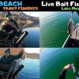 Las-Vegas-Winter-Fishing-Willow-Beach-Trout-Stock-amp-Live-Bait-Fishing-Lake-Mead
