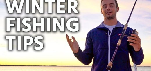 Tampa-Bay-Winter-Fishing-Tips-How-to-Catch-an-Inshore-Slam-Just-the-Tips