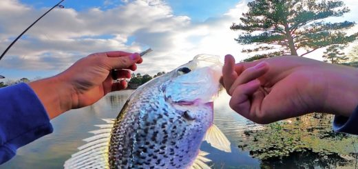 Artificial-LURES-For-CRAPPIE-and-BASS-Winter-Fishing-Tips