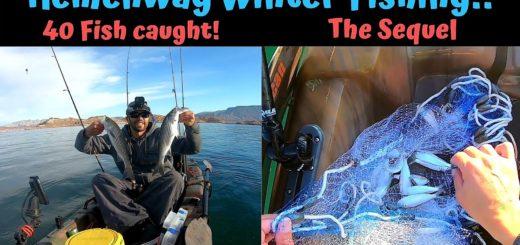 Lake-Mead-Winter-Fishing-Hemenway-Launch-LIVE-BAIT-40-FISH-DAY