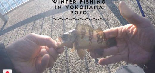 Winter-Fishing-at-Tokyo-Bay-Mebaru-Japanese-Rockfish